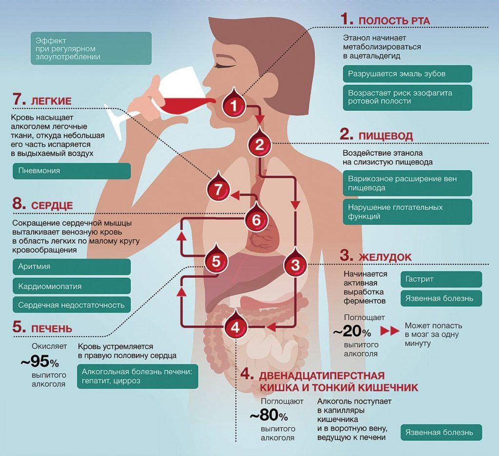 влияние алкоголя на организм при злоупотреблении