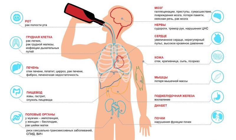 влияние алкоголя на органы пищеварения схема